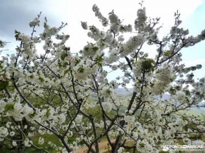 Cerezos flor_Valle del Jerte;fotos puebla de sanabria capital de vall d aran rutas senderismo altube